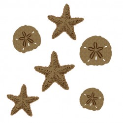 Starfish and Sand dollars