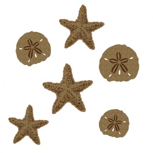 Starfish and Sand dollars - Summer