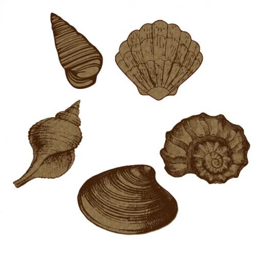 Large Seashells - Summer