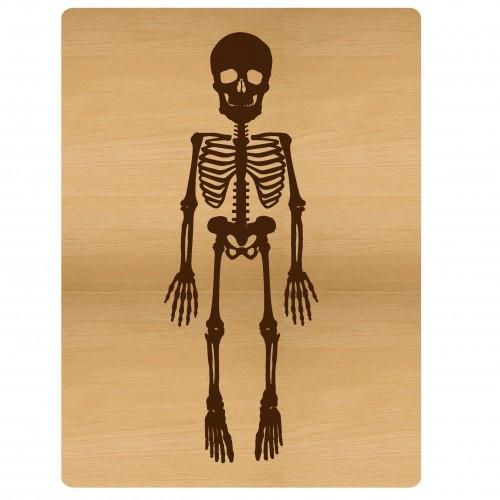 """Skeleton PL Card - 3""""x4"""" Cards"""