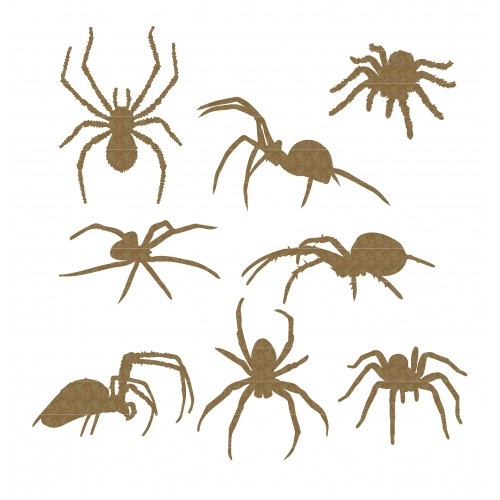 Spiders - Animals