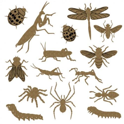 Bugs - Summer