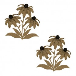 Coneflowers