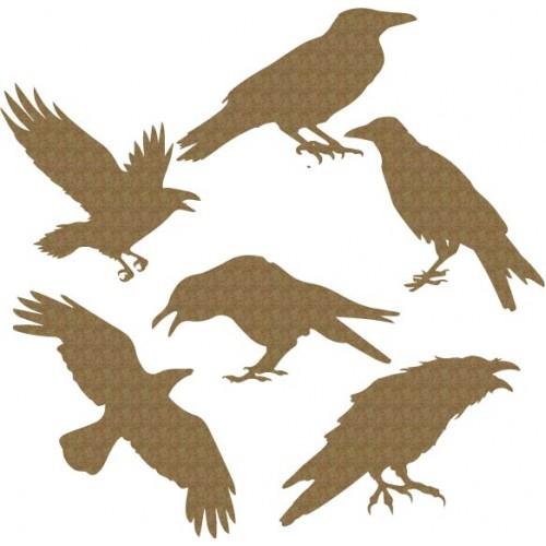 Raven - Birds