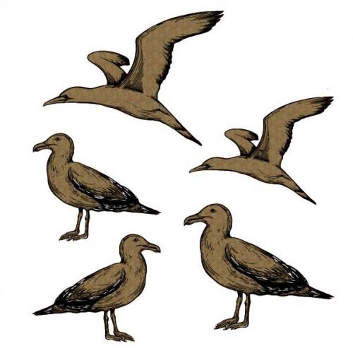Seagull Set - Animals